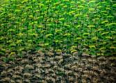"<h5>""Garden X"", 2013, 130x180cm</h5>"
